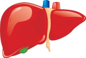 Pembersih-Liver